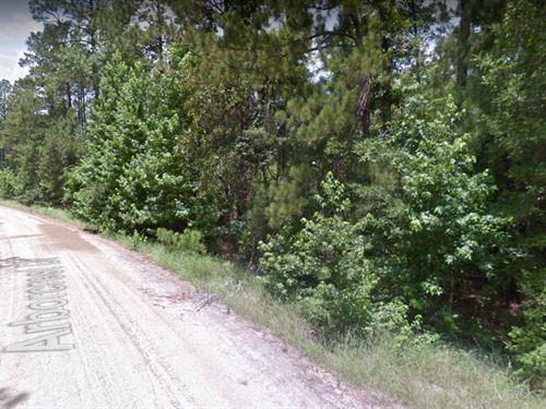 .58 Acres In Brookeland, TX : Brookeland : Jasper County : Texas
