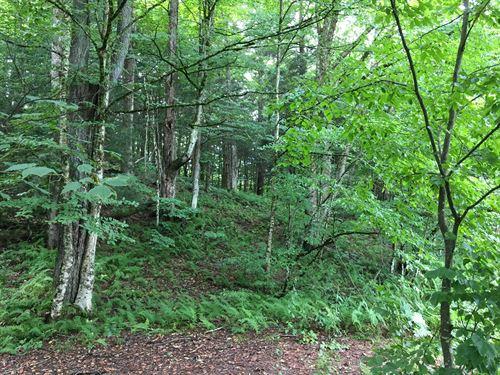 Evergreen Forest Near Reservoir : Redfield : Oswego County : New York