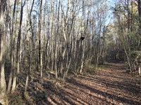 11+/- Acre Unrestricted Tract : Woodruff : Spartanburg County : South Carolina