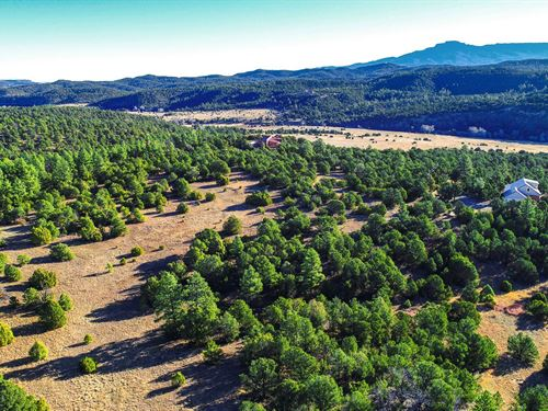 Wooded Homesite Near Trinidad Lake : Trinidad : Las Animas County : Colorado