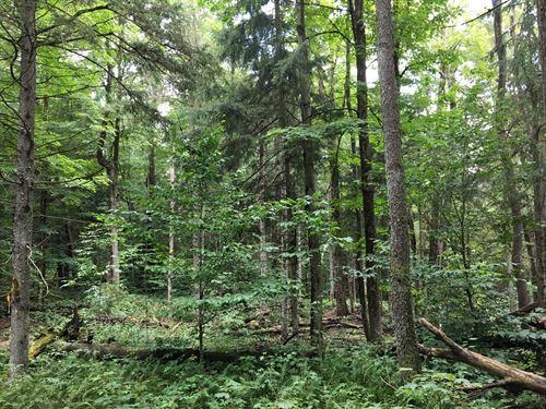 Tug Hill Woodlands : Redfield : New York County : New York