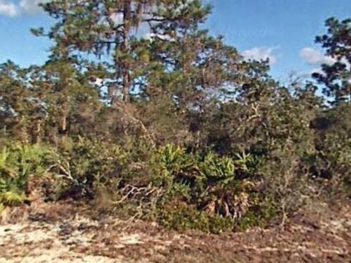 Polk County, Fl $25,000 Neg : Indian Lake Estates : Polk County : Florida