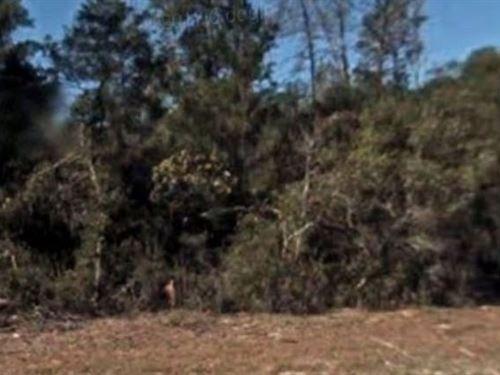 Marion County, Fl $47,500 Neg : Ocala : Marion County : Florida