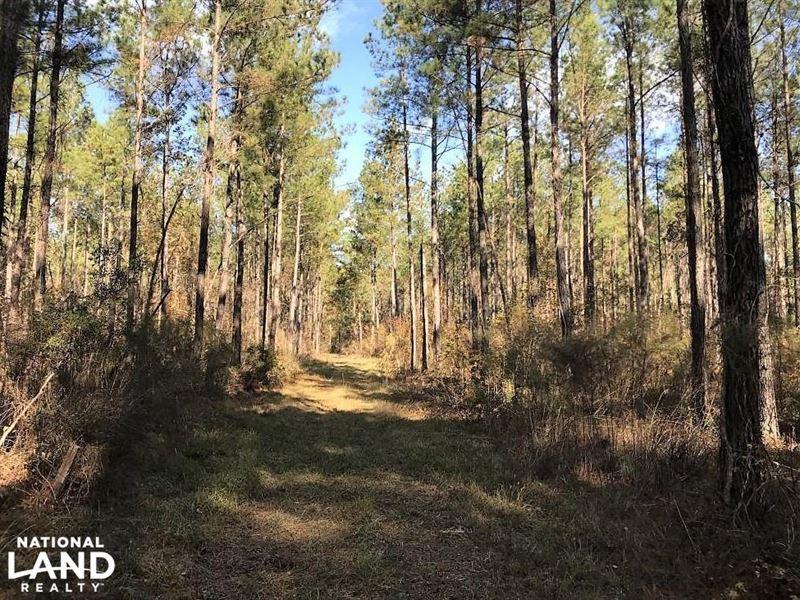 Calamus Pond Homesites : Summerville : Berkeley County : South Carolina