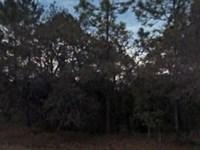 Putnam County, Fl $18,500 Neg : Satsuma : Putnam County : Florida