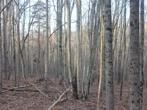 Mount Carmel Rd Tract 4, 10 Acres : Thurman : Gallia County : Ohio