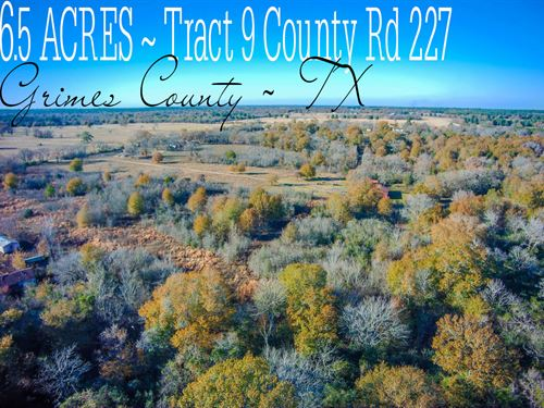 6.5 Acres In Grimes County : Bedias : Grimes County : Texas