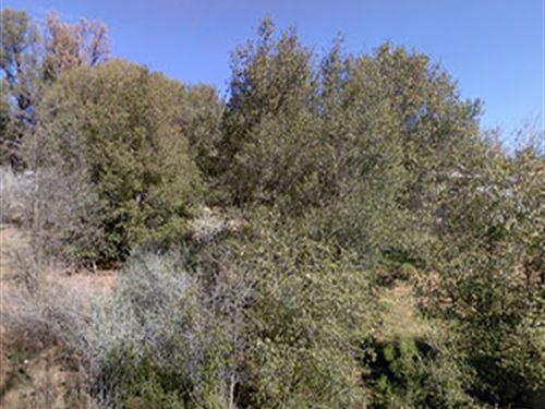 Lot Near Pine Mountain Lake : Groveland : Tuolumne County : California