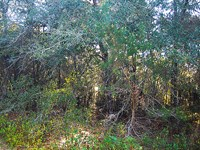 Residential Lot Near Lakes In Fl : Interlachen : Putnam County : Florida