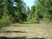 Partially Cleared 4.82 Acres Ag : Palatka : Putnam County : Florida