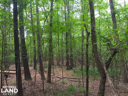 Shivers Green Homesite Tract With : Ridgeway : Kershaw County : South Carolina