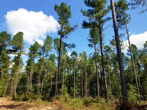Catwire South Tract : Neeses : Orangeburg County : South Carolina