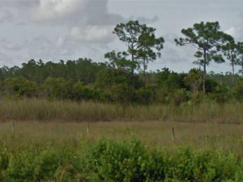 Martin County, Fl $8,000 Neg : Indiantown : Martin County : Florida