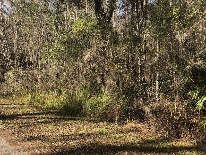 5-Acre Tracts Next To Lake Sparkman : Brooksville : Hernando County : Florida