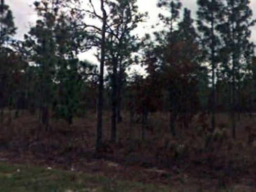 Marion County, Fl $28,000 Neg : Dunnellon : Marion County : Florida