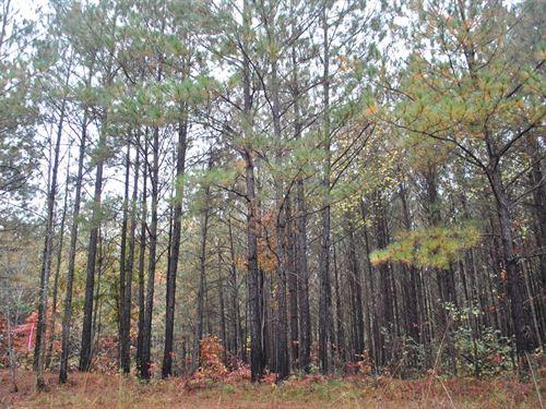 Tallapoosa River Lot 13A : Muscadine : Cleburne County : Alabama