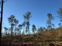 Eastern 15.325 +/- Wooded Ac, Polk : Cedartown : Polk County : Georgia