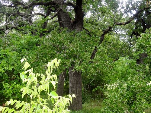 3.67 Ac, Fm 485, Branchville : Branchville : Milam County : Texas