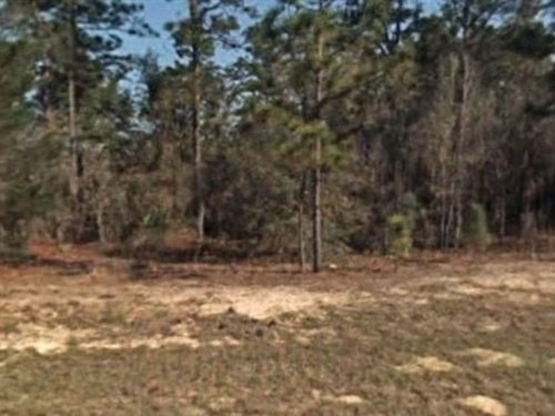 Citrus County, Fl $35,000 Neg : Pine Ridge : Citrus County : Florida