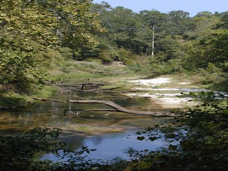16 +/- Acre River Front Property : Magee : Simpson County : Mississippi