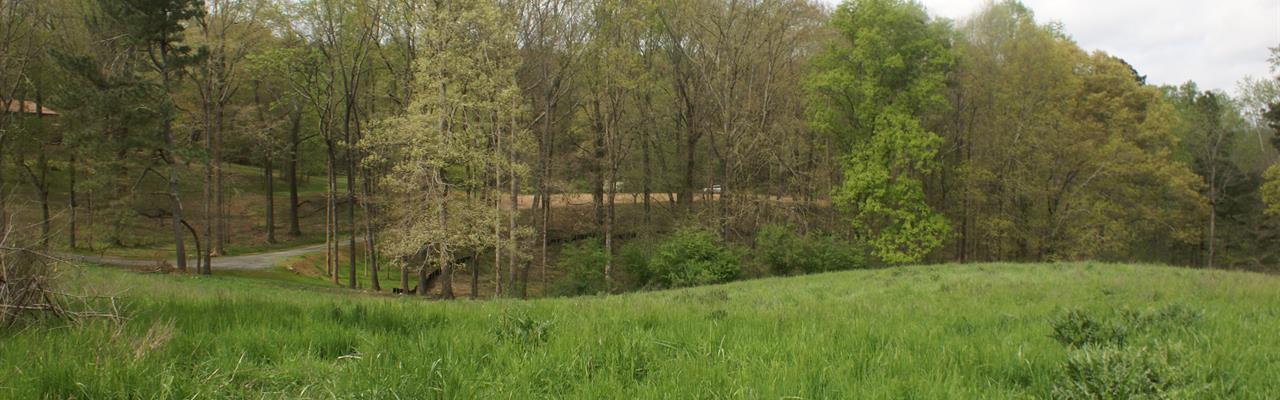 Gorgeous Rolling Acreage With Pond : Canton : Cherokee County : Georgia