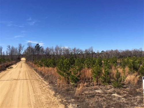 5.03 Acres in Emanuel County : Summertown : Emanuel County : Georgia
