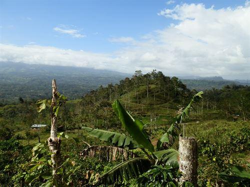 9.39 Ac Cattle Farm, Barn, Springs : Jabillos De Turrialba : Costa Rica
