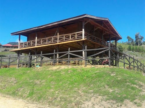7+ Acres, High Mt. Cabin And Farm : Pejibaye : Costa Rica