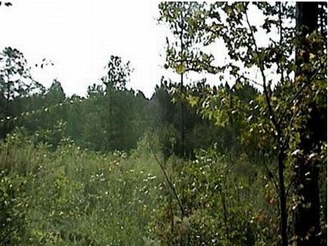 19 +/- Acre Pine Plantation : Prentiss : Jefferson Davis County : Mississippi