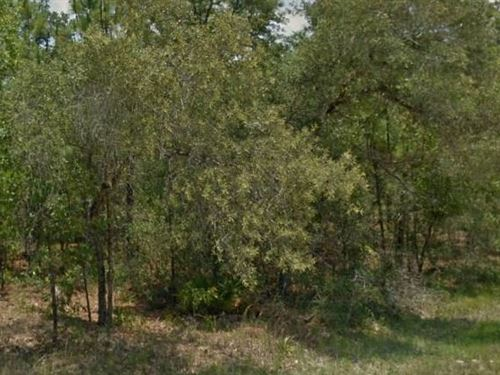 Hernando County, Fl $25,000 Neg : Weeki Wachee : Hernando County : Florida
