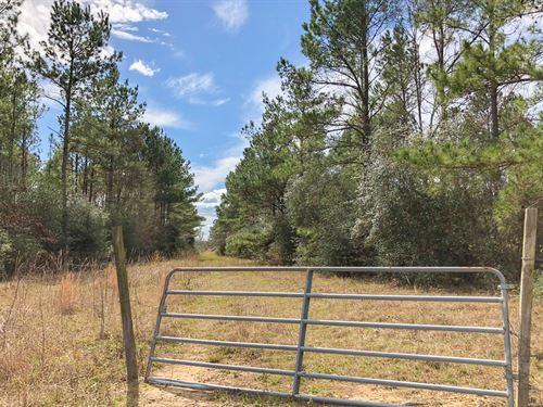 11.03 Ac Fm 230 Kittrell Acres : Trinity : Walker County : Texas