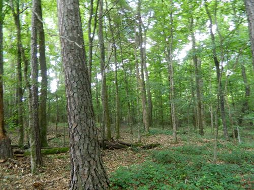 Great Lot To Build Your Dream Home : Crawford : Oglethorpe County : Georgia