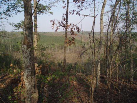 17.93 Acres Home Site : Gordon : Wilkinson County : Georgia