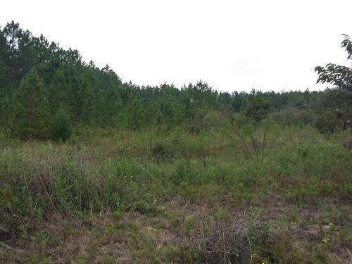 5 Acres In Marianna, FL : Marianna : Jackson County : Florida