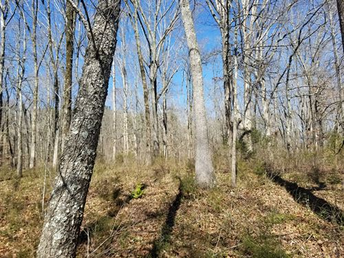 12.27+/-Acres Beautiful Usable Land : Jasper : Marion County : Tennessee