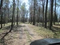 Wooded Creek Open Fields Driveway : Macon : Bibb County : Georgia