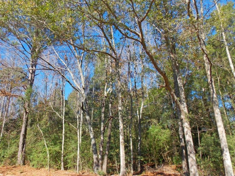 .71 Acres Cedar Ridge Rd : McComb : Pike County : Mississippi