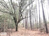 National Forest Rec Land : Jamestown : Berkeley County : South Carolina