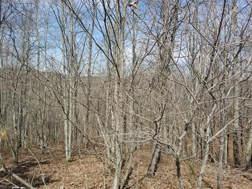 7.53+/- Acres Falling Cliff Drive : South Pittsburg : Marion County : Tennessee