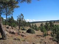 Eagles Nest 1 : Pringle : Custer County : South Dakota