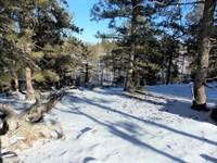 Trout Creek Pass - Camp Or Build Si : Hartsel : Park County : Colorado