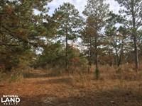 20 Acre Streamside Hound Hollow Est : Camden : Kershaw County : South Carolina