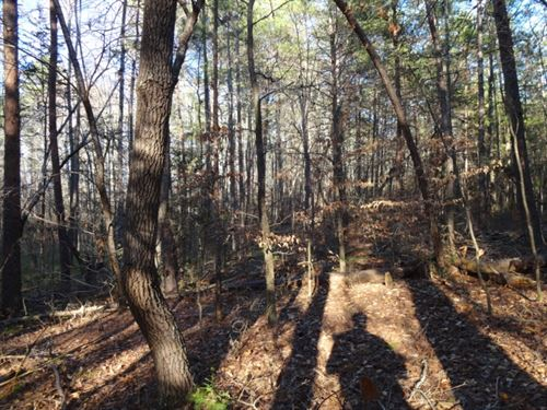 7.32 Acres Unrestricted Wooded : Belton : Greenville County : South Carolina