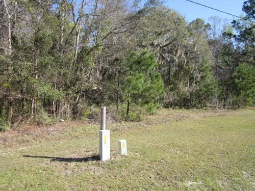 Land Auction In Townsend, Ga : Townsend : McIntosh County : Georgia