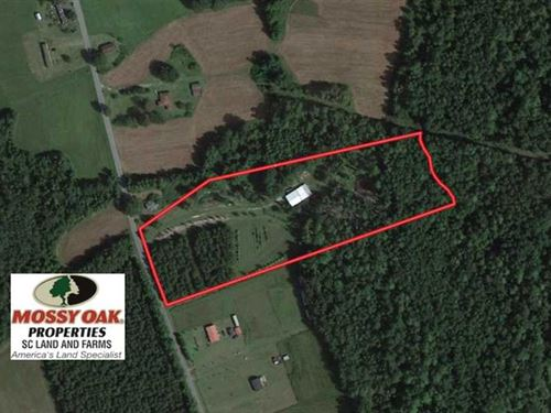 6.56 Acres of Residential Timber : Greeleyville : Clarendon County : South Carolina