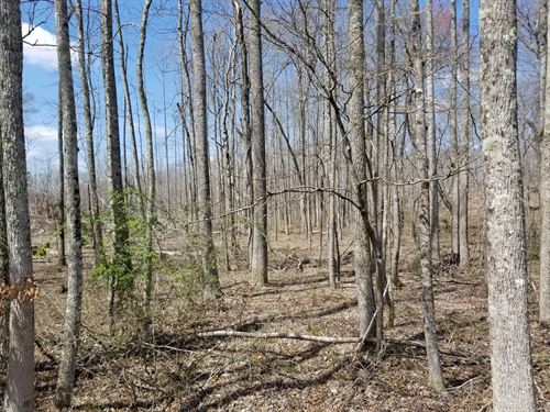 5+/- Acres Unrestricted With Creek : Tracy City : Grundy County : Tennessee