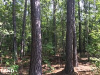 Bonneau Ridge 5 Acres : Bonneau : Berkeley County : South Carolina