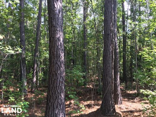 Bonneau Ridge 5 Acres : Bonneau : Berkeley County : South Carolina