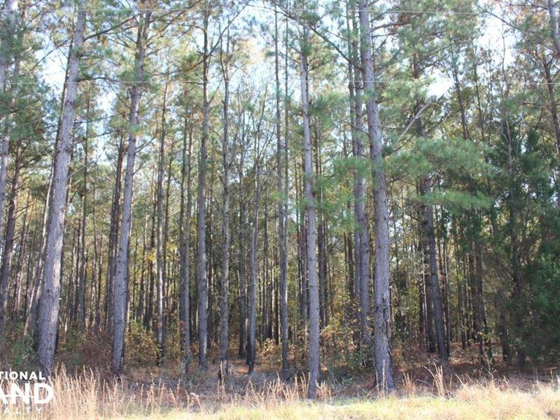 Bonneau Ridge 6.75 Acres : Bonneau : Berkeley County : South Carolina