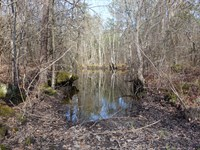 14.02 Acres - Lee County, Sc : Bishopville : Lee County : South Carolina